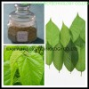 Mulberry Leaf Extract 1-DNJ